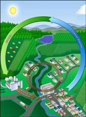 BCAP Biomass Crop Assistance Program